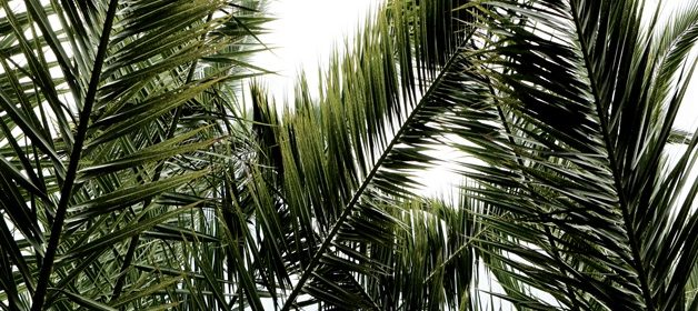 life-of-pix-free-stock-palms-leaves-light-leeroy