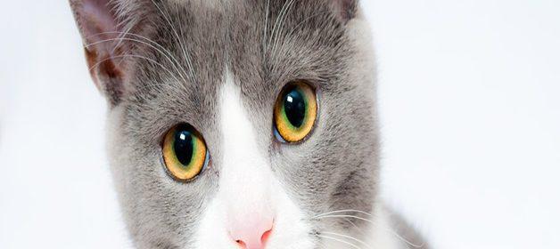 cat-1151519_960_720