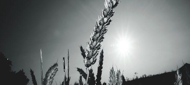 pexels-photo-126920-large