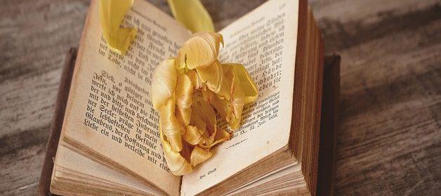 book-1291164_960_720