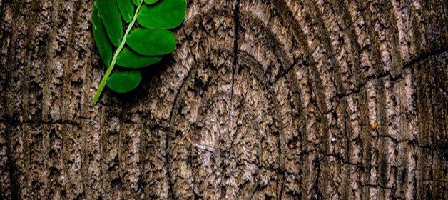 pexels-photo-129743-large